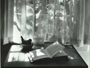Vintage photo by André Kertész of an open book in front of window looking out to a lovely scene of trees and sunshine.